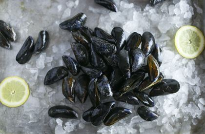 Exmouth mussels (1kg)