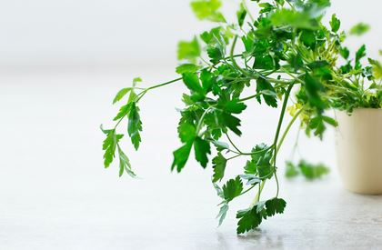 Flat Leaf Parsley (Pre-Packed)