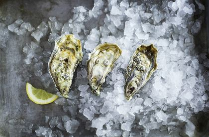 Dozen Teignmouth oysters (pack of 12)